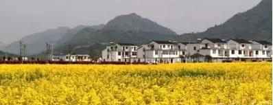【春游黄山】清明长假自驾出行 旅居公寓成为首选