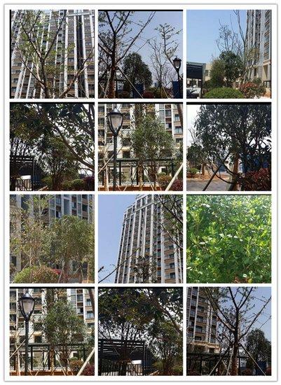 【滨江之都】绿化进行时 60种植物参与绿化装扮