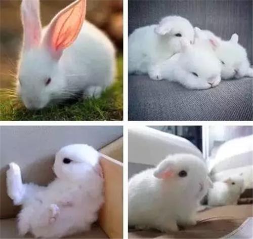 壁纸 动物 兔子 500_472