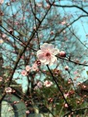 桥外的桃花是老去的故事