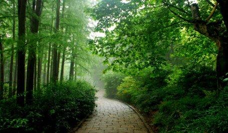 晨曦森林散步,看得见的洁净空气
