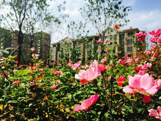 中建悦海和园二星标识建筑设计别墅获住建部审两图纸绿色图片