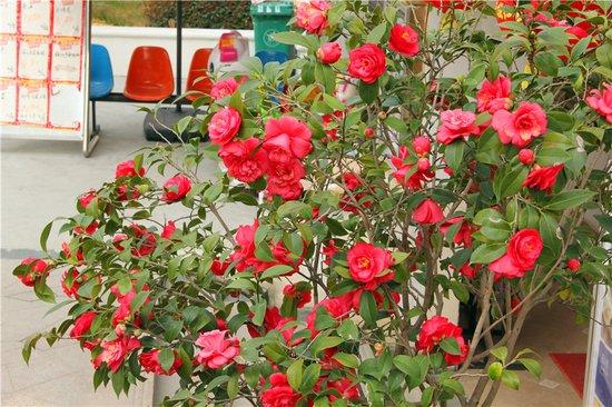 小Q看房:花红柳绿好景致 星湖湾四期持续热销