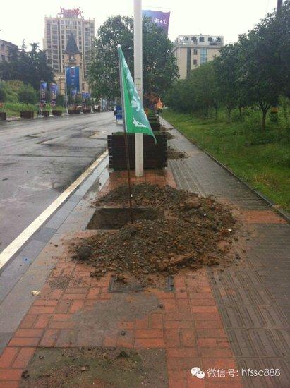 宏峰上上城松林路道路绿化工程已启动(图)