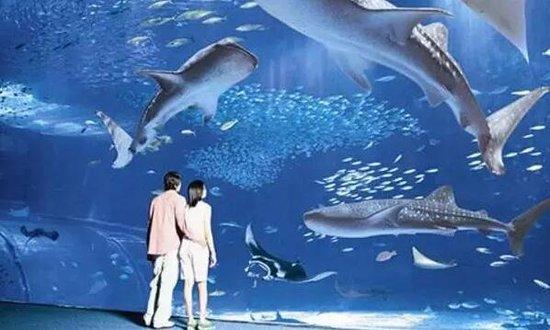 湖南最大室内乐园十一开业 内含全球首创鲨鱼喂食