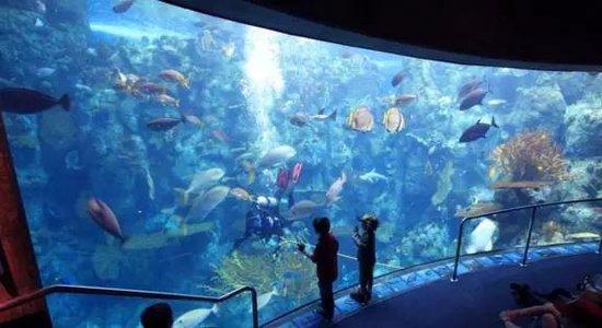 海洋城上新闻联播啦 益阳文化旅游升级的光荣之路