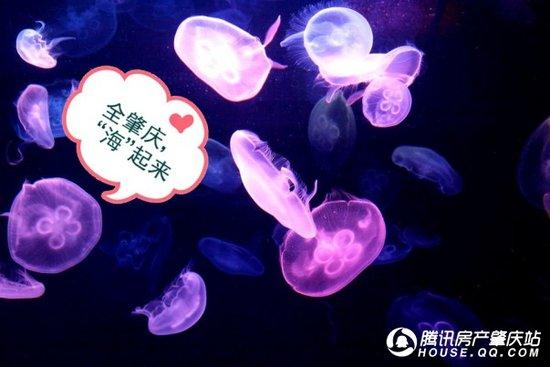 """【林隐天下】8.15日""""肇庆首届海洋生物展""""开幕了"""