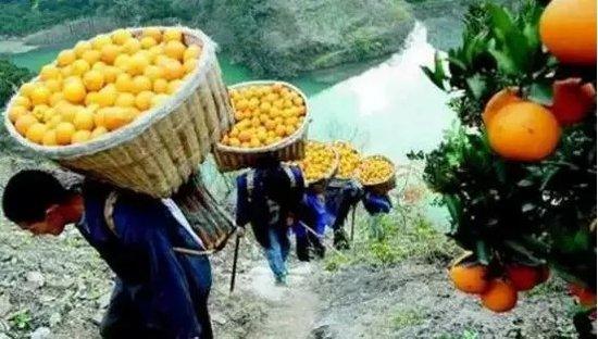 水墨蘭庭 | 爱心助力果农,万斤脐橙免费送!