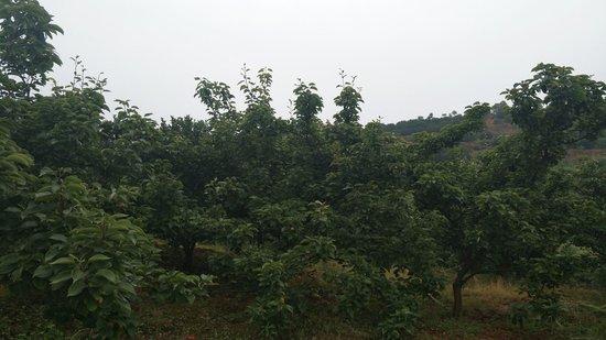重大商机!永州农林产业化龙头企业寻求合作