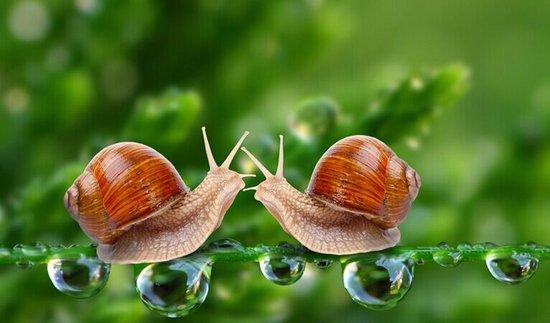 """8月楼市:没有""""爆点""""但有""""蜗牛""""的稳健"""