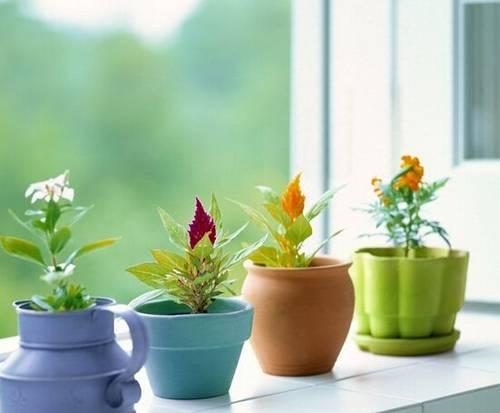 家居风水中的植物摆放