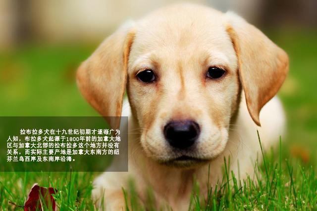 壁纸 动物 狗 狗狗 640_427
