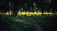 浙江9个超美的萤火虫观赏地