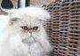 如何让自己家的猫变时尚?