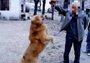 老人立遗嘱将存款留给狗