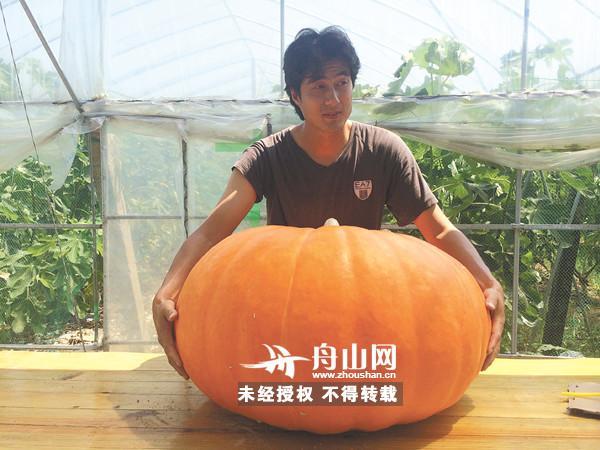 舟山一男子种出巨型南瓜 最大一个重达69公斤
