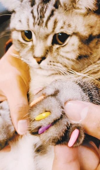 """给猫咪做""""美甲"""" 小心坑了自家宠物"""