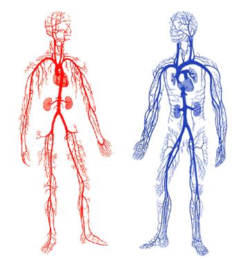 【5.18血管健康日】来瞧瞧,你的血管健康吗?