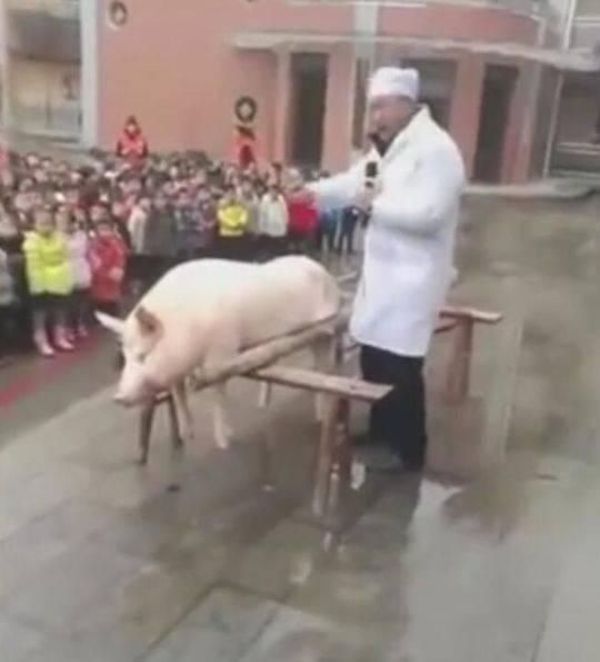 幼儿园要孩子围观杀年猪被批 辩称没当孩子面杀猪