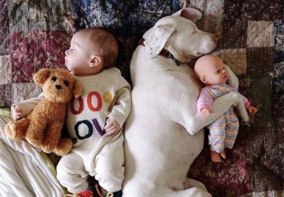 摄影师记录中的酣睡宝宝和汪星人甜美瞬间