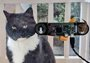 他给猫设计脸部识别装置