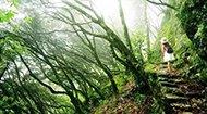 浙南原始森林 透露古老和野性