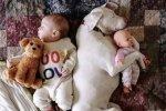 酣睡宝宝与汪星人