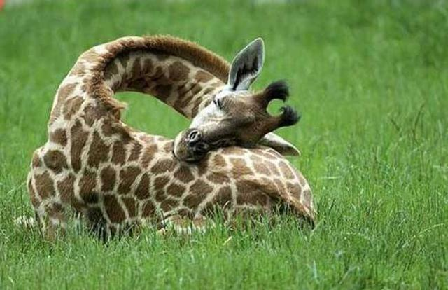 动物的奇葩睡眠习惯 你知道多少?