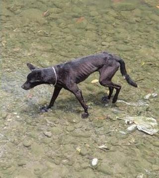 黑狗走失84天 全家坚持寻找终于找回