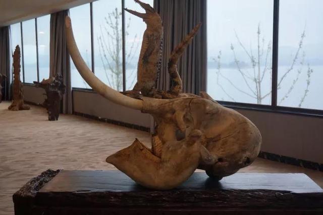 """千岛湖这座博物馆厉害了 镇馆之宝是""""蟑螂""""?"""