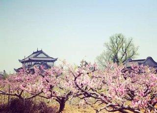 浙里有春天独有美景美食 挑时间走起