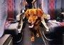 海南航空出新规:可以带宠物一起坐飞机了!