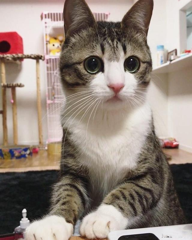 wechat娱乐圈 人世间 创客club 原创视频  给猫咪的下巴挠痒痒对猫咪