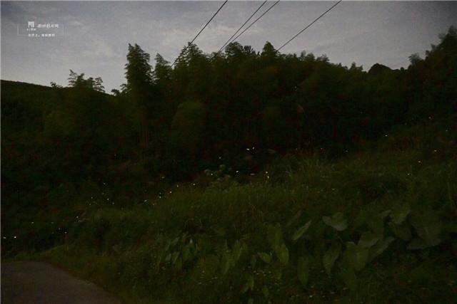 胜似童话场景 衢州药王山景区惊现大量萤火虫