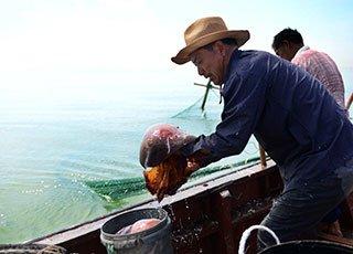 东海海蜇特许开捕 吃货有福了