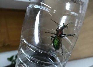 山上捡漂亮虫子 是国家保护动物