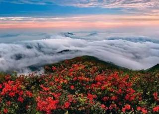 丽水云和:孤云野鹤悠闲境
