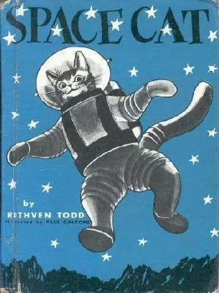 从流浪猫到宇航员 这只猫用短短一生暖遍了世界