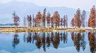 江浙沪罕见的绝美水上森林