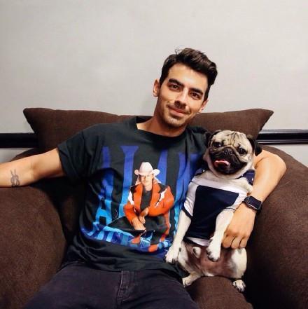 拥有320万粉丝的厌世巴哥犬 国际巨星都想和它拍照