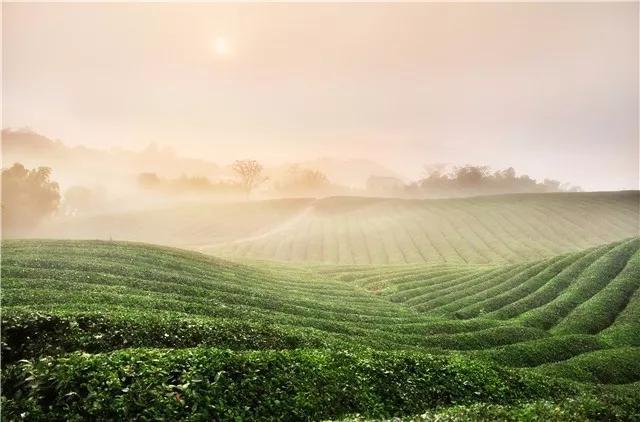 """浙江这个名茶之地风景美如画 可免费品尝""""爱心茶"""""""