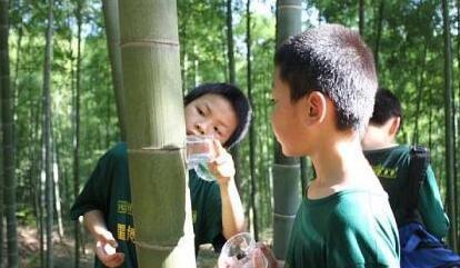 """杭州版""""神奇动物在哪里"""" 孩子玩耍中解密""""自然魔法"""""""