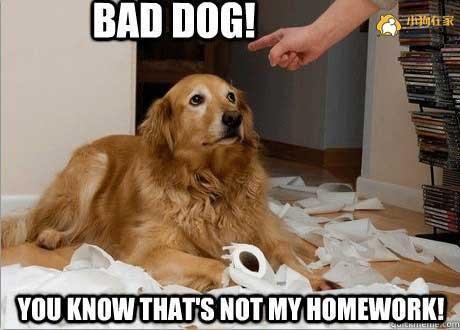 怎么叫都叫不回来?原来狗狗的名字不能随便喊!