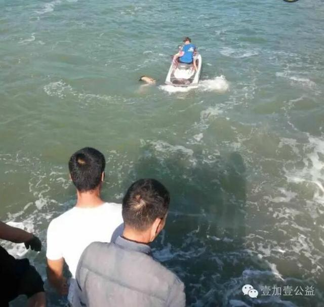 温州一男子海钓不幸落海遇难 尸体已被打捞上岸