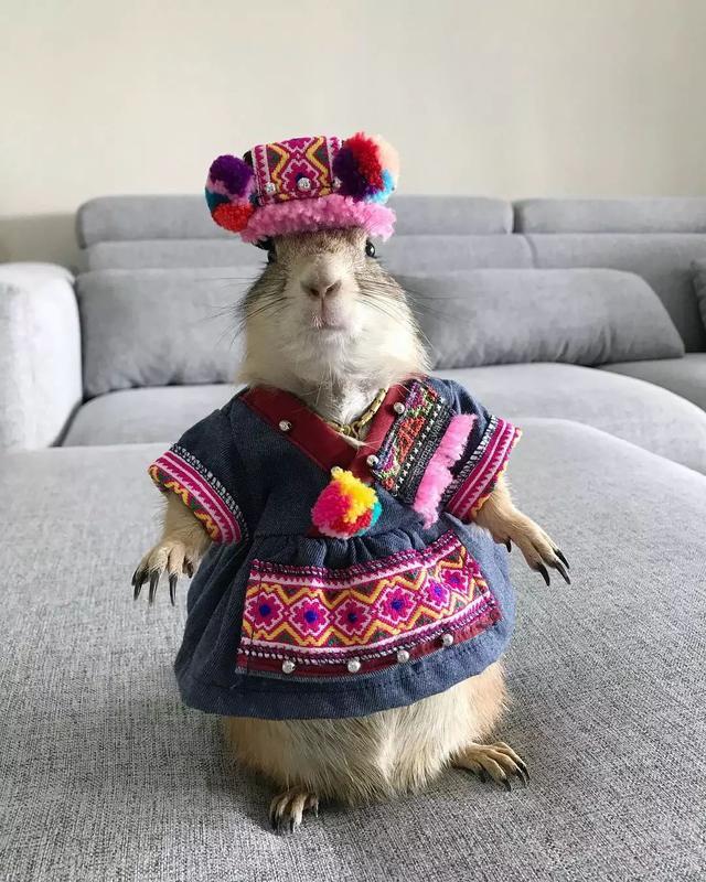 一只堪比模特的土拨鼠 风格既慈祥又亲切