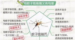 【新闻课62】蚊子偏爱哪种血型?