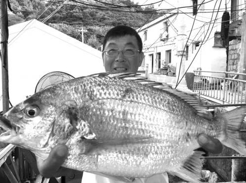 男子在温州南麂岛钓到大鱼 3公斤重的黄鳍鲷