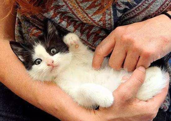 你也想吸猫?新手养猫注意事项