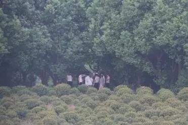 40度的高温天 杭州这群人聚在一起行不法之事