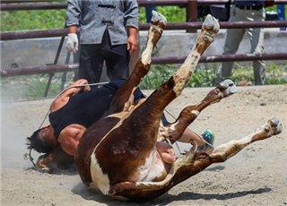 浙江某地人和牛打起来了